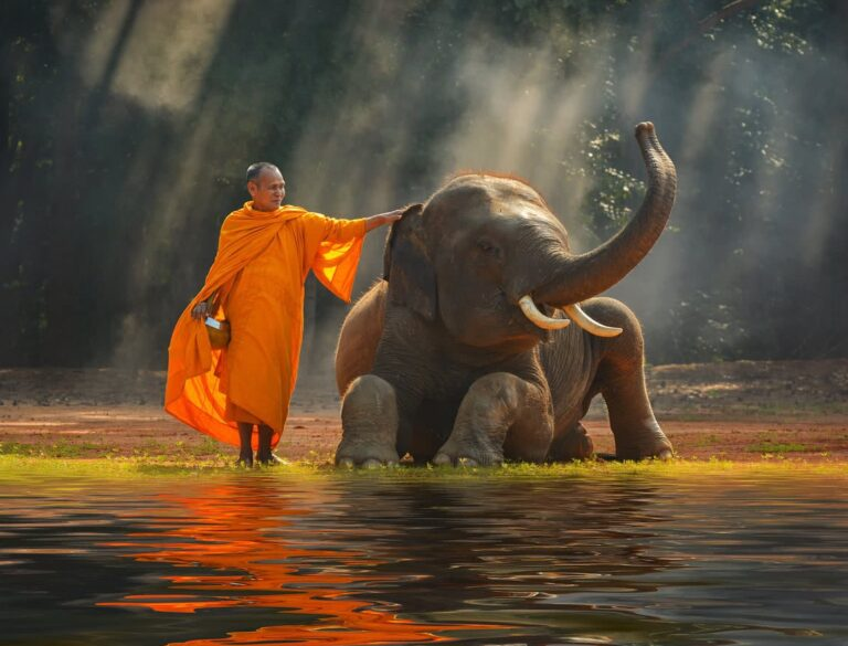 Sawadee & Herzlich Willkommen bei Tha Chang – dem kleinen Elefanten aus Thailand