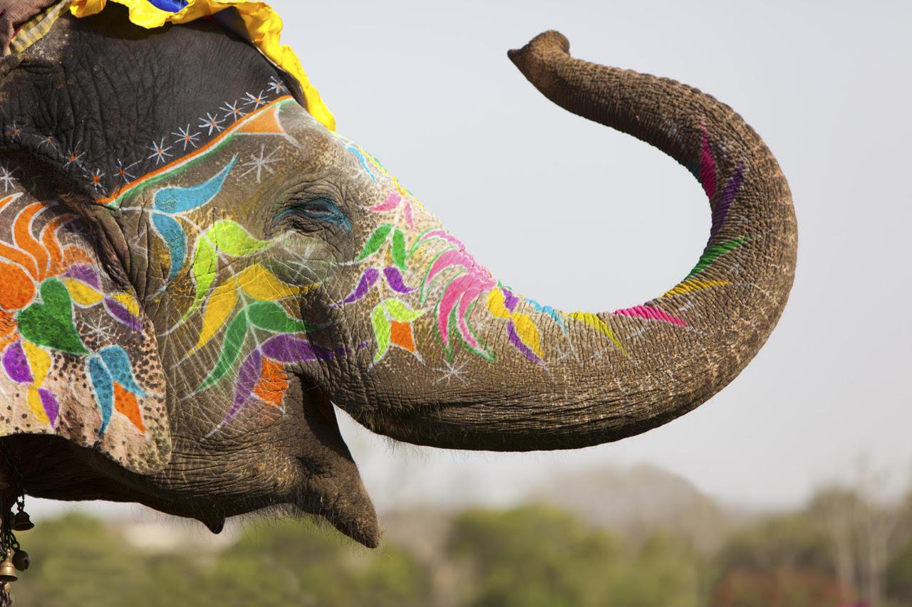 Red Rüssel Day im Tha Chang Elefant Thailand